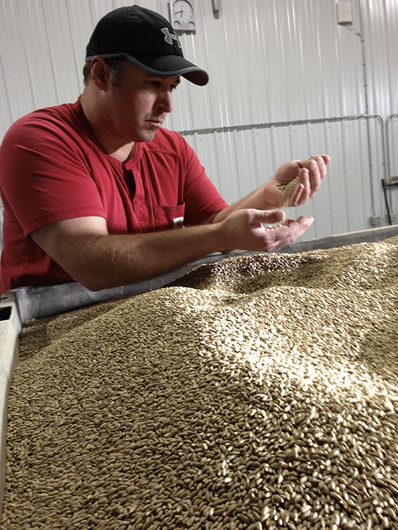 Far North Spirits' Michael Swanson inspects rye seeds // Photo by Cheri Reese