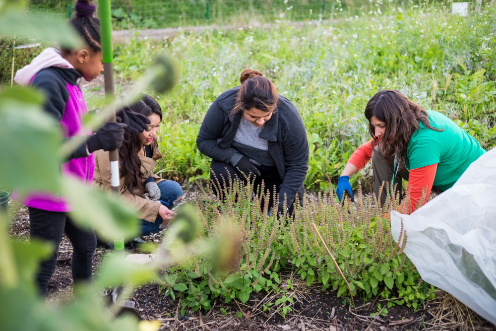 Stephanie Hankerson (right) demonstrates the proper weeding technique to several volunteers at Frog Town // Photo by Amy Anderson
