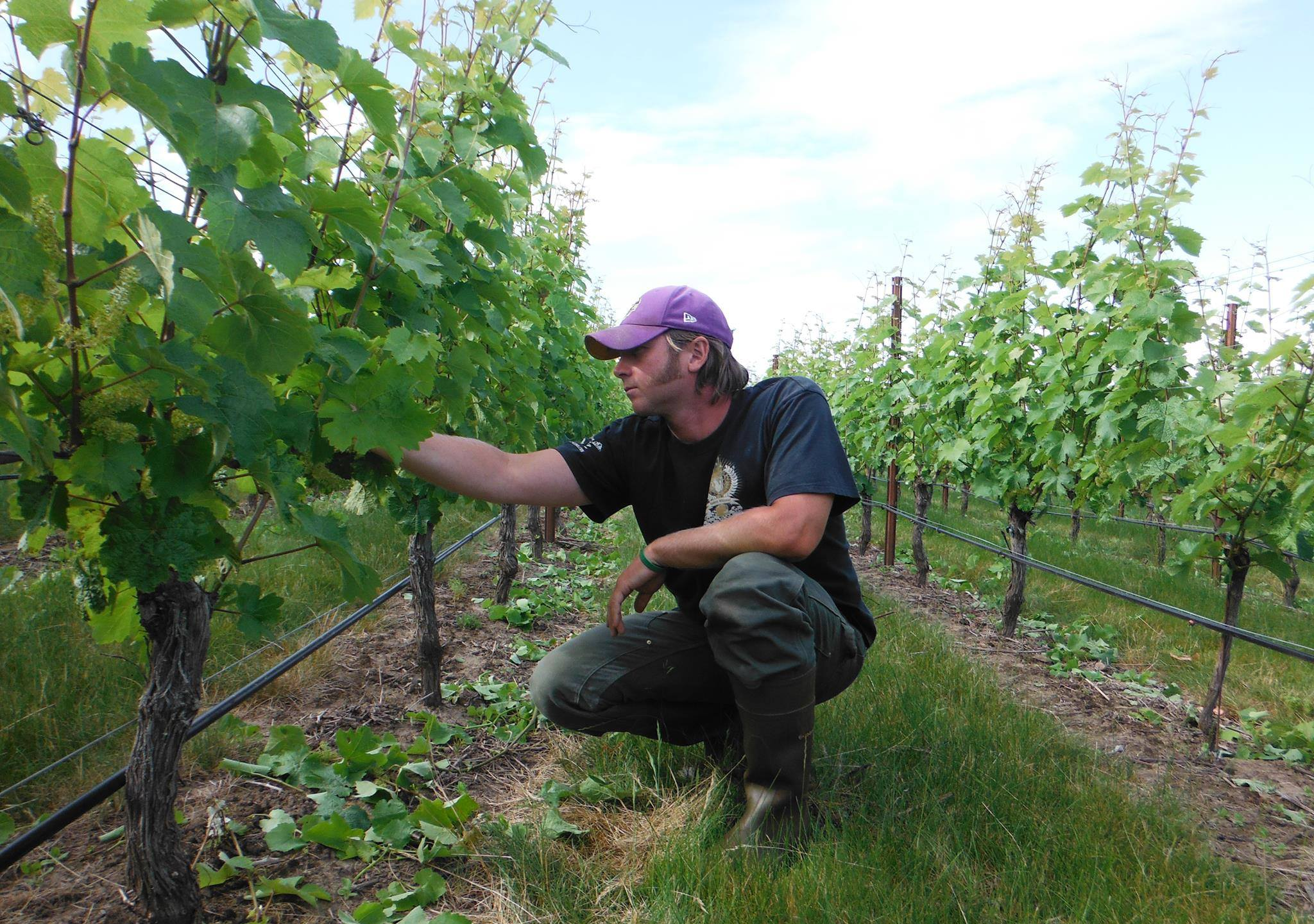 Bill Hooper looks over the crops at Weinbau Paetra Vineyard // Photo courtesy Weinbau Paetra