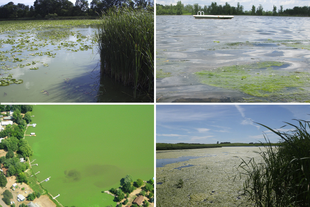 A few examples of impaired lakes in Minnesota // Photos courtesy Minnesota Pollution Control Agency