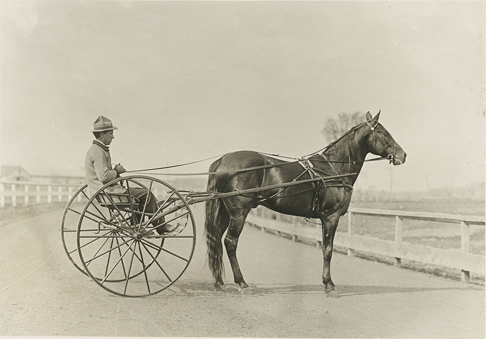 Dan Patch in a racing harness // Photo courtesy Minnesota Historical Society