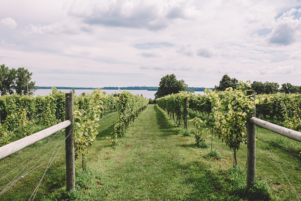 The vineyard at Sovereign Estate overlooks the lake and is located nearby Schram Vineyards and Parley Lake Winery // Photo by Sam Ziegler