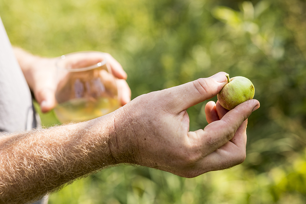 Nate Watters holds a spitter apple in the orchard of Keepsake Cidery // Photo by Tj Turner