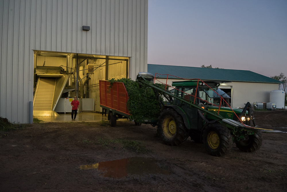 A harvester prepares to unload its trailer at the Might Axe Hops facility in Foley, Minnesota // Photo courtesy Mighty Axe Hops