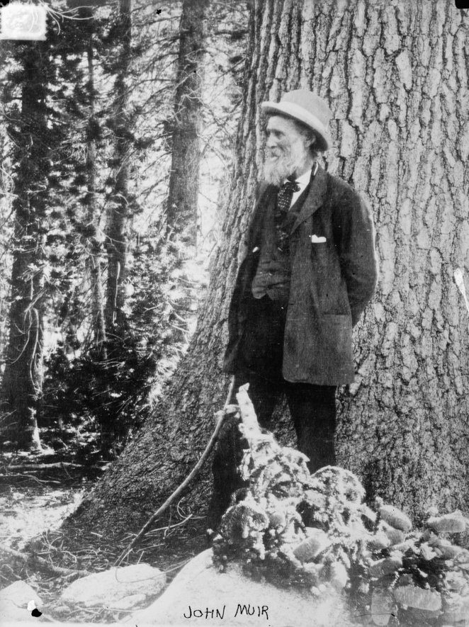 John Muir - Photo courtesy of Library of Congress, Prints & Photographs DivisionWEB