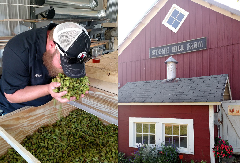Join the Lift Bridge crew and pick some hops for this season's fresh hop brew // Photo courtesy Lift Bridge Brewing Co.