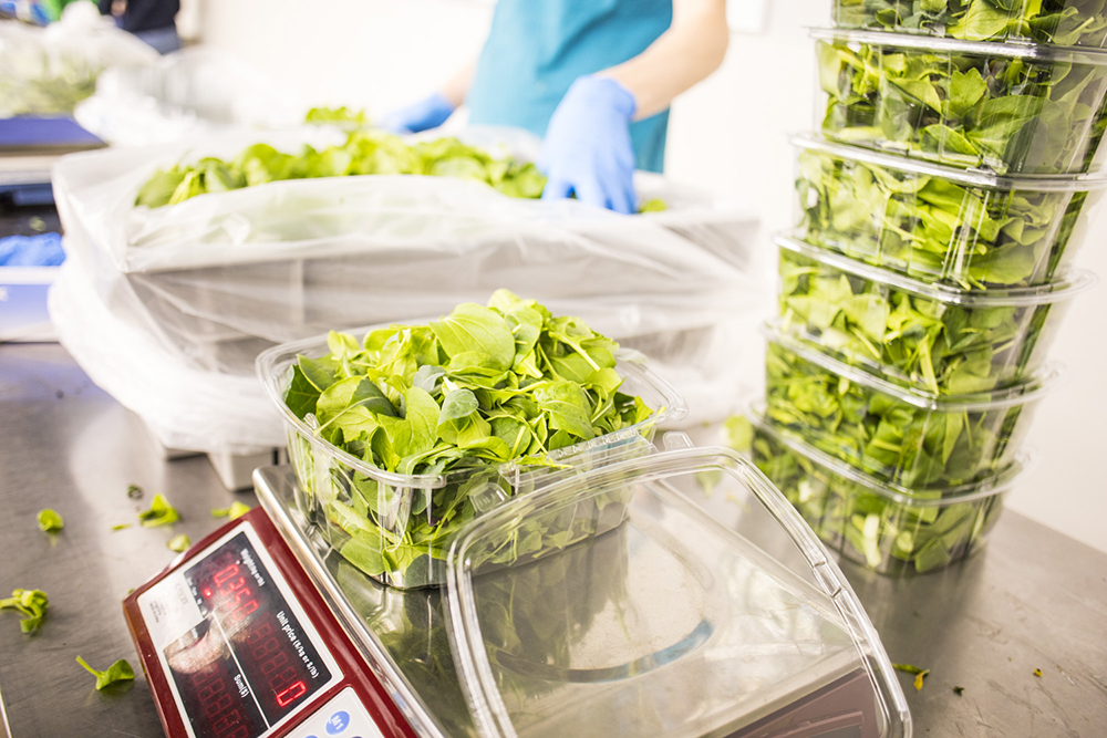 Packaged greens at Urban Organics ready to be shipped to stores // Photo by Tj Turner